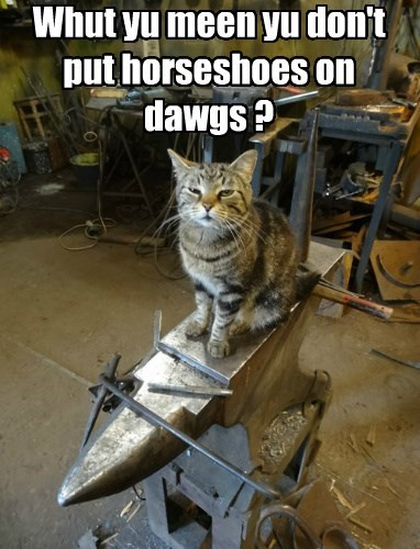 Cats,dogs,i dont understand,horseshoe