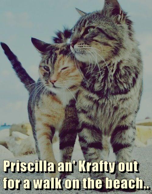 Priscilla an' Krafty out for a walk on the beach..