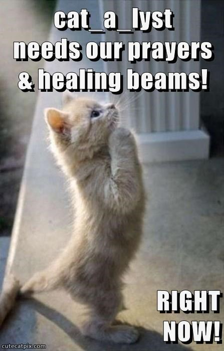 cat_a_lyst           needs our prayers & healing beams!  RIGHT                                        NOW!