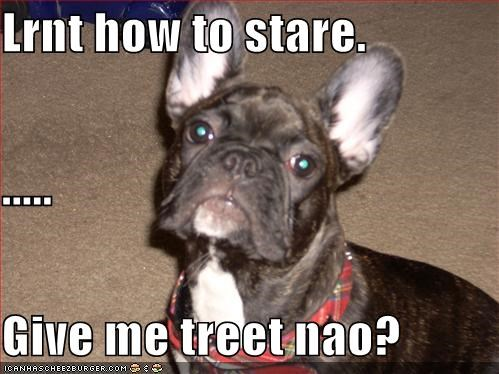 Lrnt how to stare. ..... Give me treet nao?
