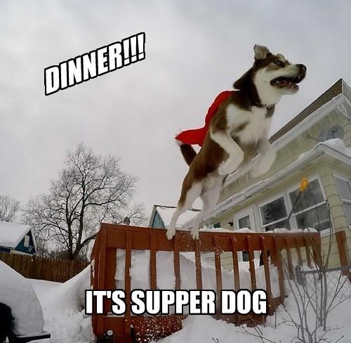 dogs,puns,dinner,super hero