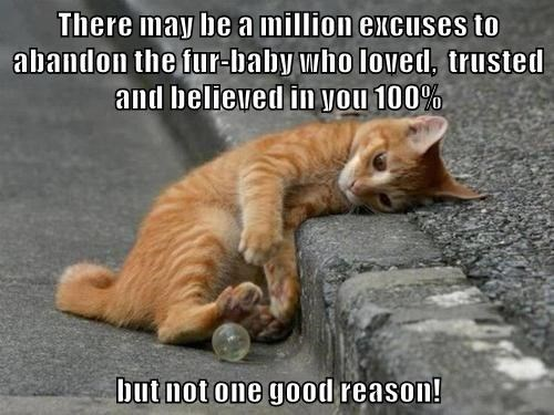 There may be a million excuses to abandon the fur-baby who loved,  trusted and believed in you 100%  but not one good reason!