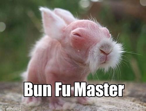 Bun Fu - The Art of the Hop