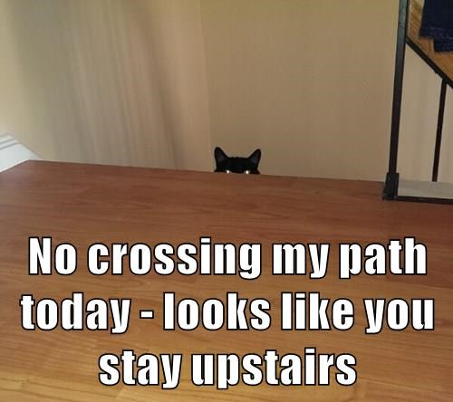 No crossing my path today - looks like you stay upstairs