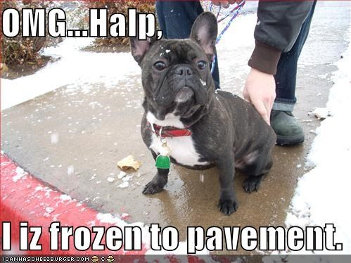 OMG...Halp,  I iz frozen to pavement.