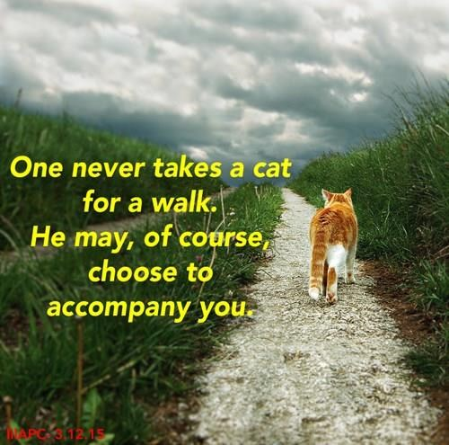 honor,walk,Cats