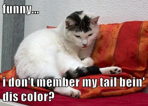 funny...  i don't member my tail bein' dis color?