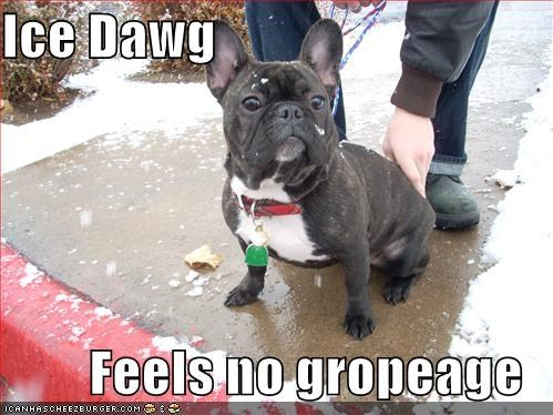 Ice Dawg  Feels no gropeage