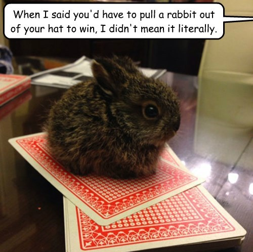 When I said you'd have to pull a rabbit out of your hat to win, I didn't mean it literally.