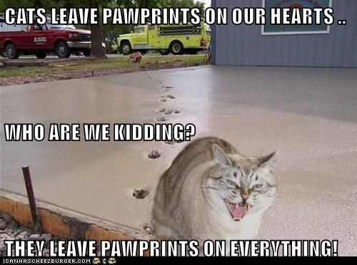 CATS LEAVE PAWPRINTS ON OUR HEARTS .. WHO ARE WE KIDDING? THEY LEAVE PAWPRINTS ON EVERYTHING!