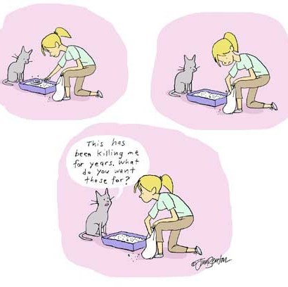 Cats Have Questions About Human's Strange Behavior