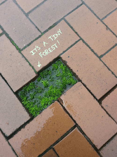 A Forest in the Sidewalk