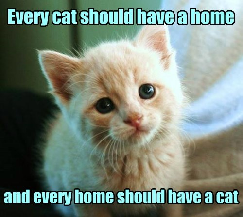 Every cat should have a home