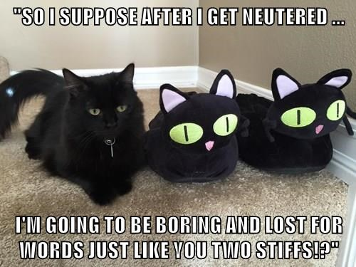 """""""SO I SUPPOSE AFTER I GET NEUTERED ...  I'M GOING TO BE BORING AND LOST FOR WORDS JUST LIKE YOU TWO STIFFS!?"""""""