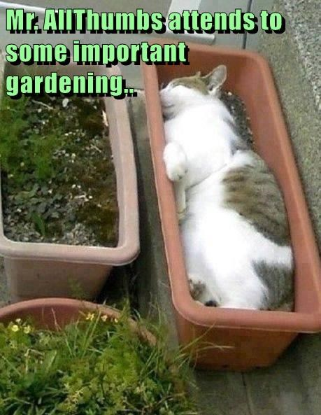 Mr. AllThumbs attends to some important gardening..