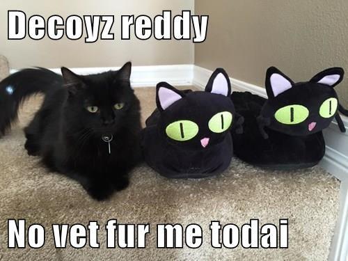 Decoyz reddy  No vet fur me todai