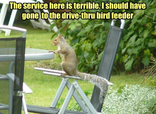 waiting,squirrel,drive thru,service,noms