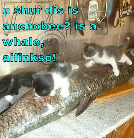 u shur dis is anchobee? is a whale,                      aifinkso!