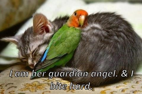 I am her guardian angel. & I bite hard.