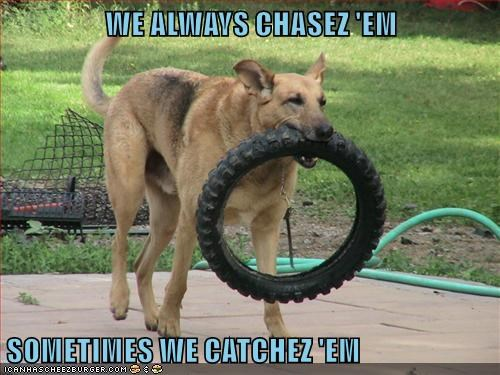 caught,dogs,tire,prize