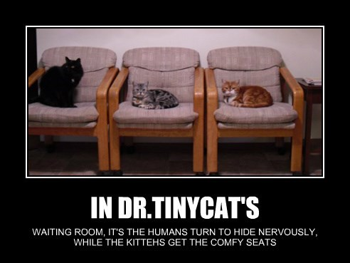IN DR.TINYCAT'S