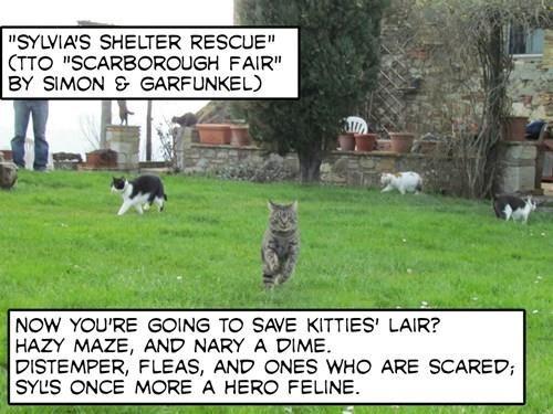 """""""Sylvia's Shelter Rescue"""" (TTO """"Scarborough Fair"""" by Simon & Garfunkel)"""