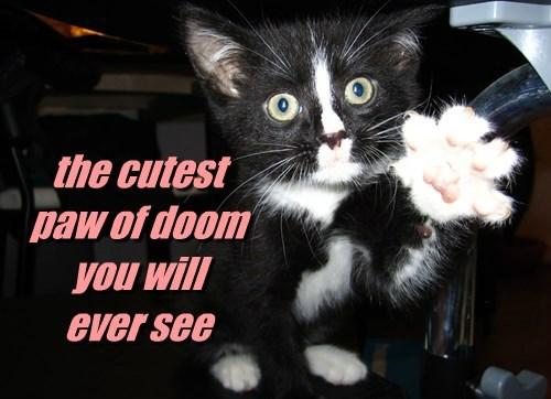 cat,doom,paw,caption