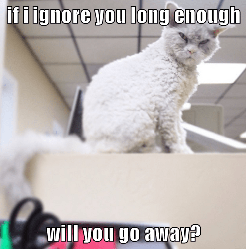 if i ignore you long enough  will you go away?