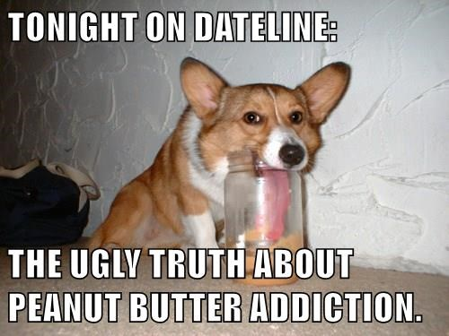 dogs,peanut butter,addicted,corgi