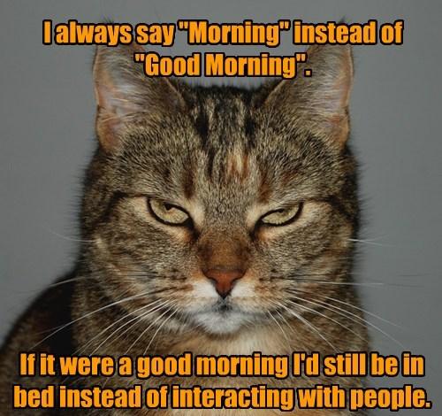 cat,good morning,caption
