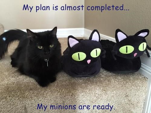 My plan is almost completed...  My minions are ready.