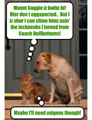 A Bwave Skolar on Coach Bellbottoms' Mountain Climbing Team acksepts teh challenj to clime Mount Goggie aka Sniffer (Coach Bellbottoms' foster brudder!)..