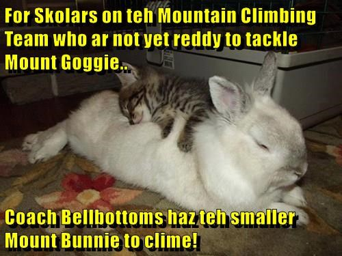 For Skolars on teh Mountain Climbing Team who ar not yet reddy to tackle Mount Goggie..  Coach Bellbottoms haz teh smaller Mount Bunnie to clime!