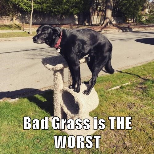 Bad Grass is THE WORST