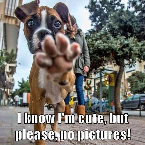 I know I'm cute, but please, no pictures!