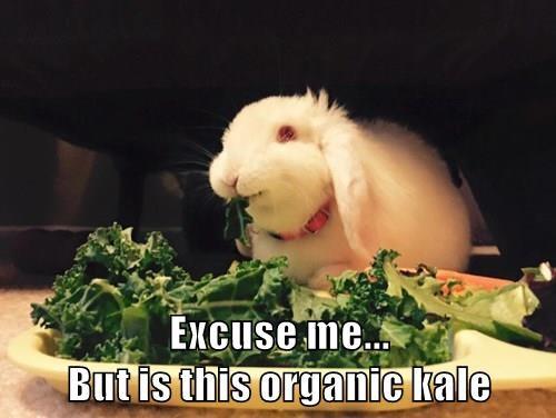 Bunday,excuse me,noms,bunny