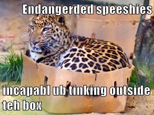 Endangerded speeshies  incapabl ub tinking outside teh box