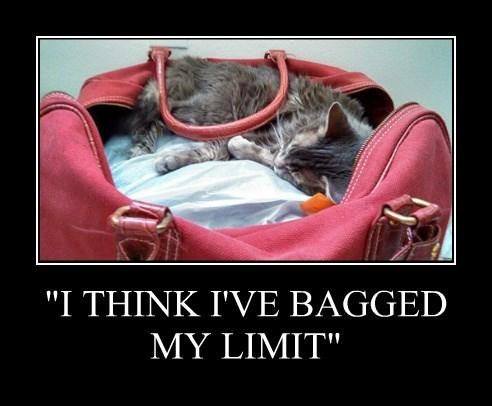 """I THINK I'VE BAGGED MY LIMIT"""