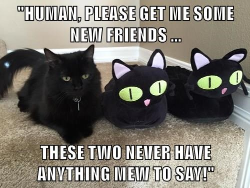 """""""HUMAN, PLEASE GET ME SOME NEW FRIENDS ...  THESE TWO NEVER HAVE ANYTHING MEW TO SAY!"""""""