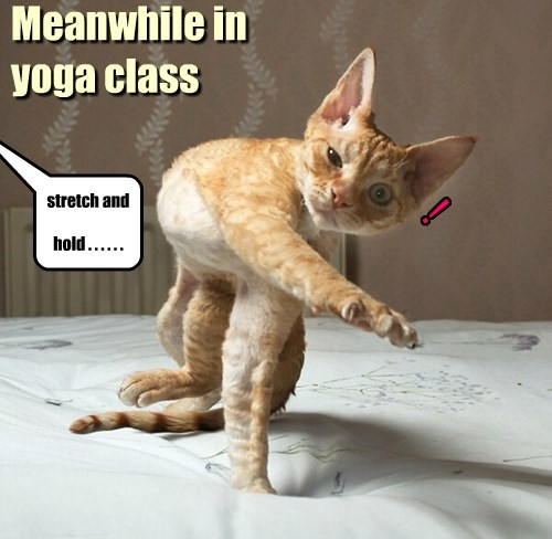 Meanwhile in yoga class