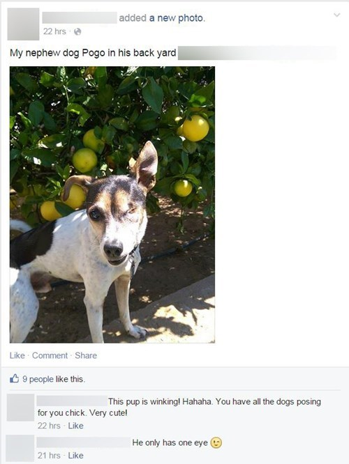 funny-facebook-pic-one-eyed-dog-awkward