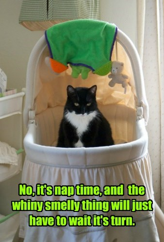 No, it's nap time, and  the whiny smelly thing will just have to wait it's turn.