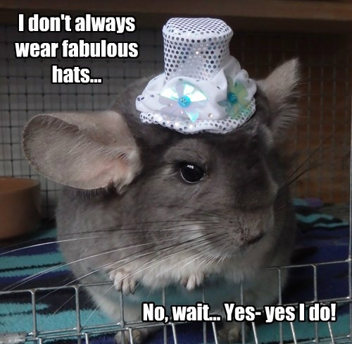 I don't always wear fabulous hats...
