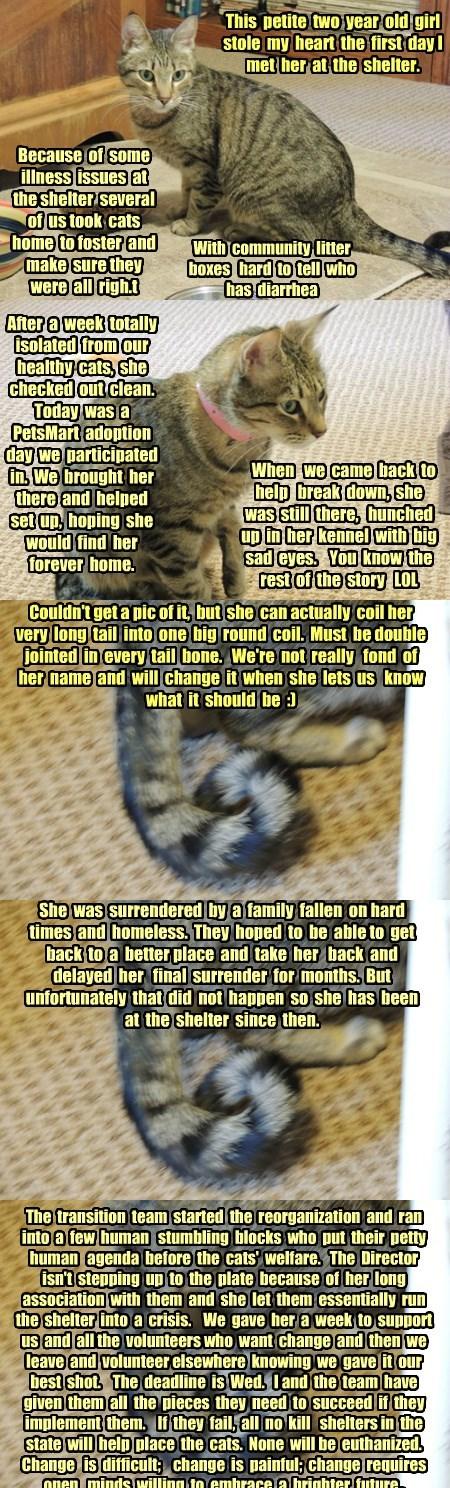 Good Grief - we have another cat!  Meet Gaya