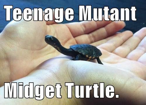 Teenage Mutant  Midget Turtle.