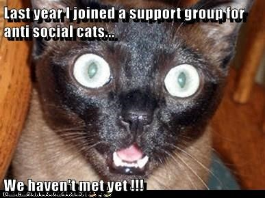 Last year I joined a support group for anti social cats...  We haven't met yet !!!