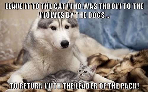 LEAVE IT TO THE CAT WHO WAS THROW TO THE WOLVES BY THE DOGS ..  TO RETURN WITH THE LEADER OF THE PACK!
