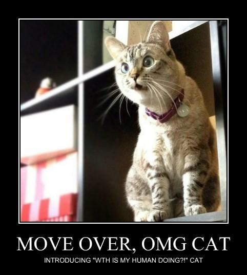 MOVE OVER, OMG CAT