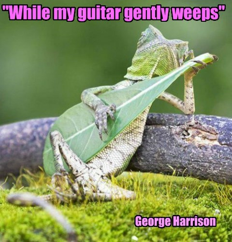 """While my guitar gently weeps"""
