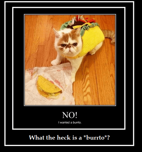 cat,taco,burrito,typo,spelling,funny